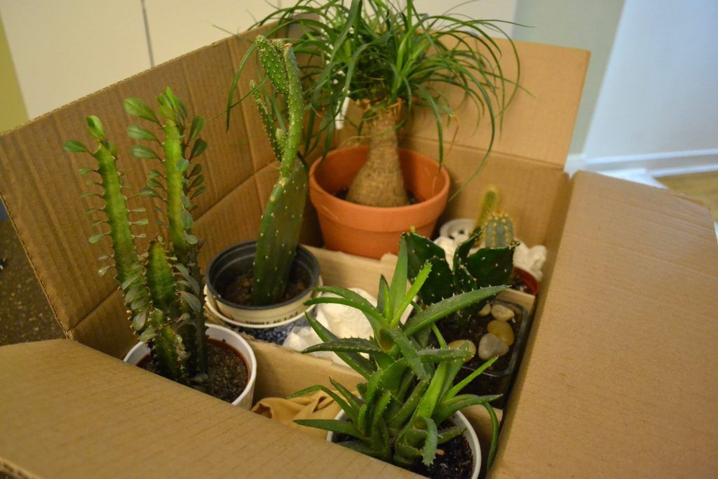 Handling Your Plants During a Sydney Removal